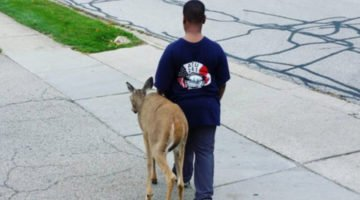 A Nosy Neighbor Sees A 10-Year-Old Walking With A Blind Deer And The Internet Has A Heart Meltdown