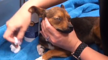 This Poor Dog's Eyes Could Not Open. When They Did Open, It Was A Joyful Moment!