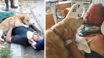 16 Pics Showing Why Dogs Are The Most Loving Animals On Earth. This Is Unconditional Love At Its Best