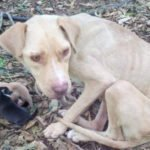 This Mama Dog Was Abandoned And Tied To A Tree. She Had To Give Birth With No Food, Water Or Shelter