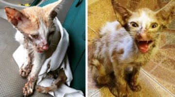 The Vet Wanted To Euthanize This Cat But His Amazing Recovery Shocked Everyone