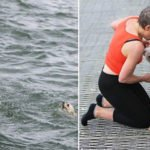 He Was At The Pier To Scatter His Grandmother's Ashes And Ended Up Saving A Drowning Dog