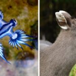 19 Of The Strangest Animals You Never Knew Existed