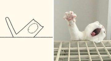 These 'Stupid Cat Drawings' Are So Lovably Accurate That They Will Steal Your Heart