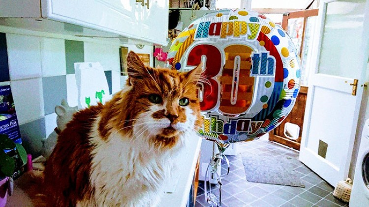 1988-cat-30th-birthday
