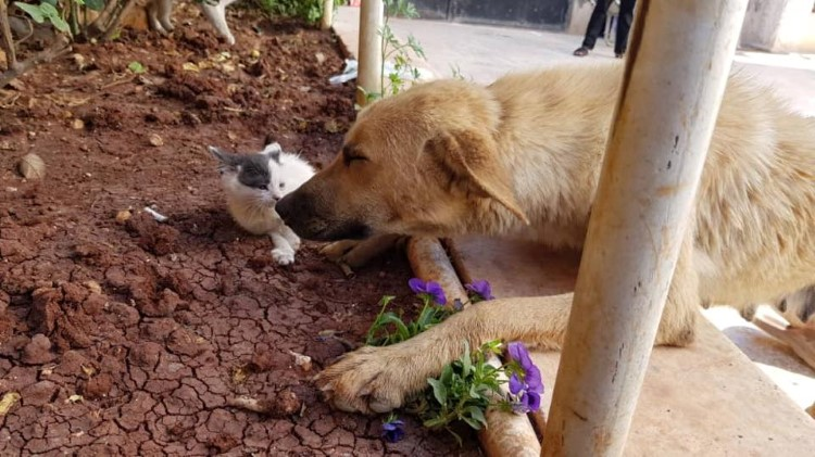 mama-dog-finds-comfort-orphaned-kitten