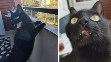 This Cat Goes Out On The Balcony For The First Time And The Internet Can't Get Enough Of It