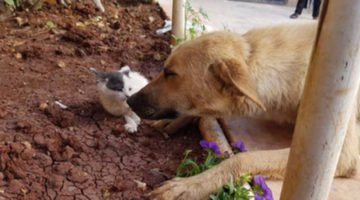 A Mama Dog Finds Comfort From Her Grief In This Adorable Orphaned Kitten