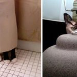 21 Cats That Need To Check Their Hiding Skills