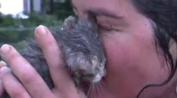 Woman Rushes To Save A Drowning Kitten Crying For Help
