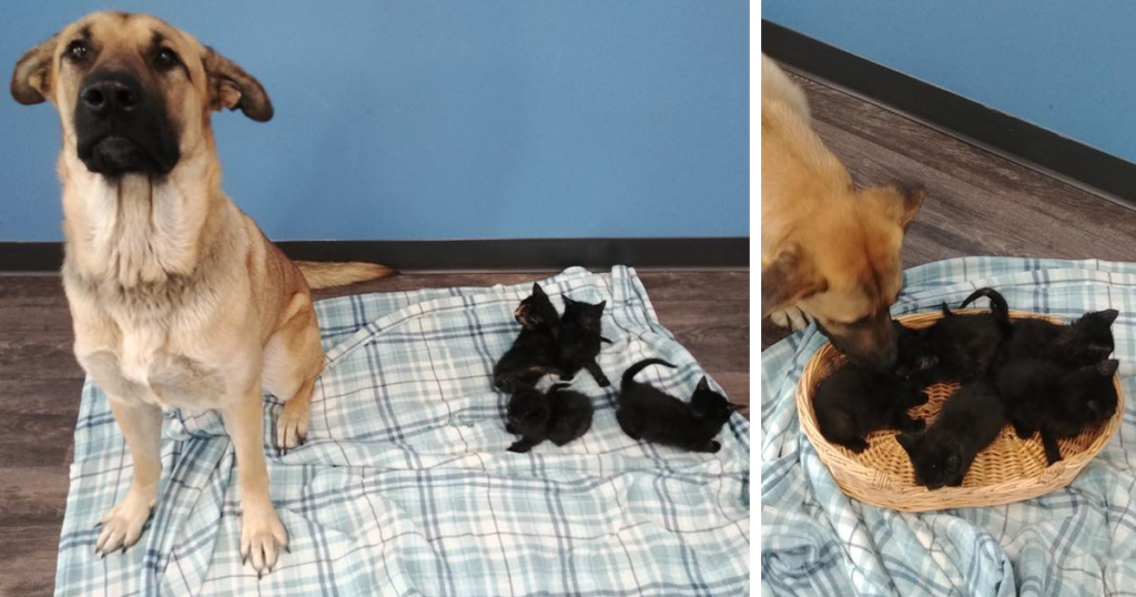 Stray Dog Found Caring For Abandoned Kittens Off The Side Of The Road