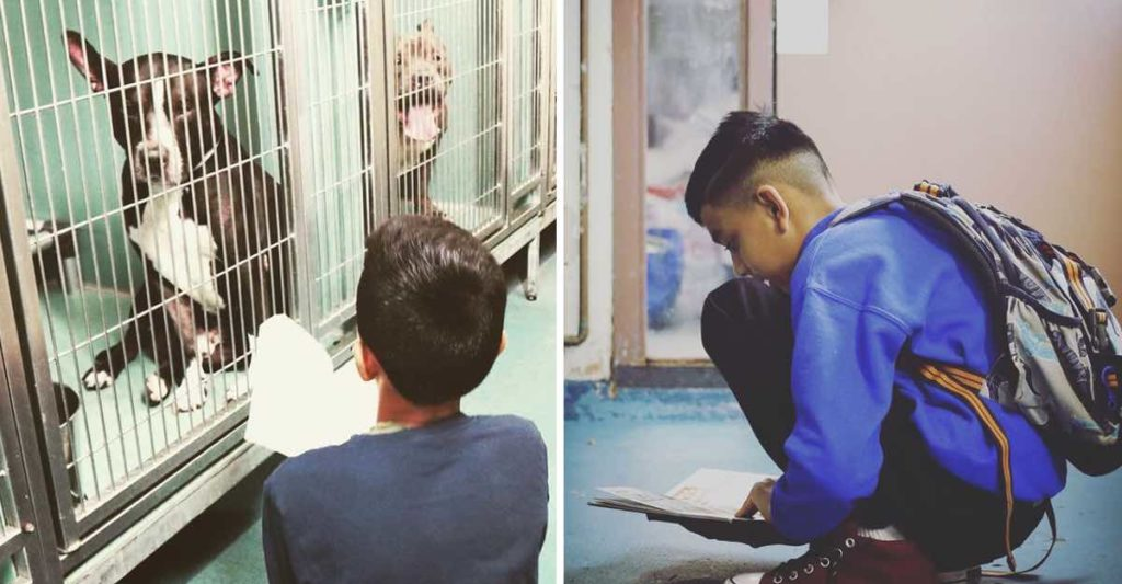 This Kindhearted boy Visits Shelter Every Weekend To Read For The Dogs