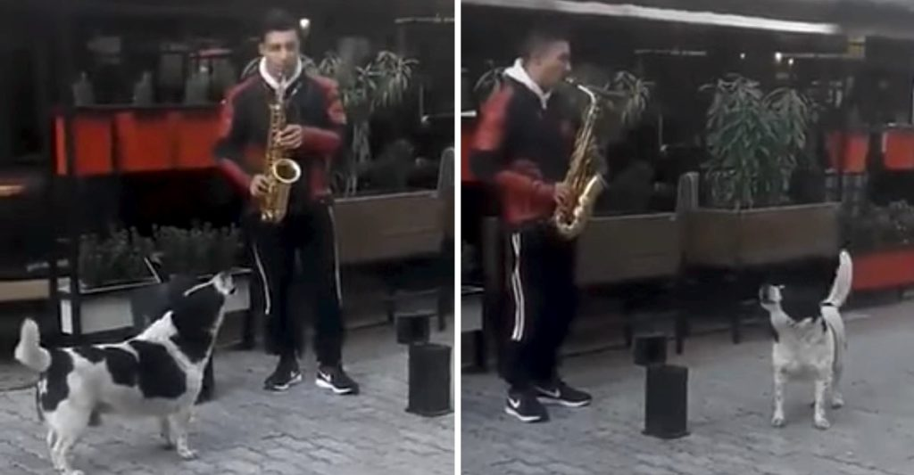 Stray Dog Performs With Street Musician In An Adorable Scene